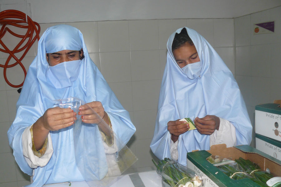 Photo of Afghan women working in a vegetable packing facility