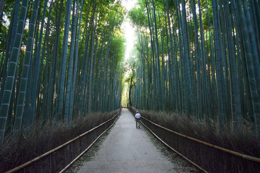 Photo of a bamboo grove in Kyoto, Japan