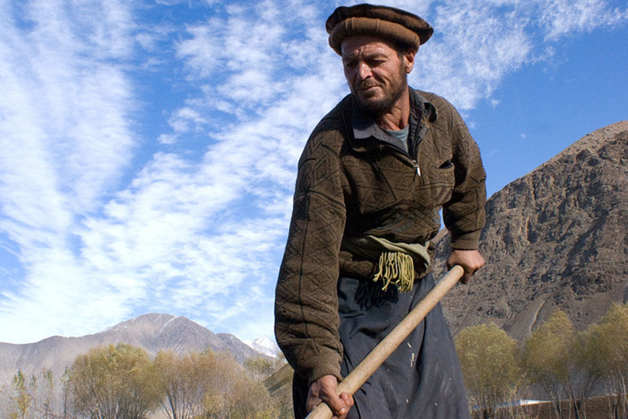 Photo of a man tending crops in Afghanistan.