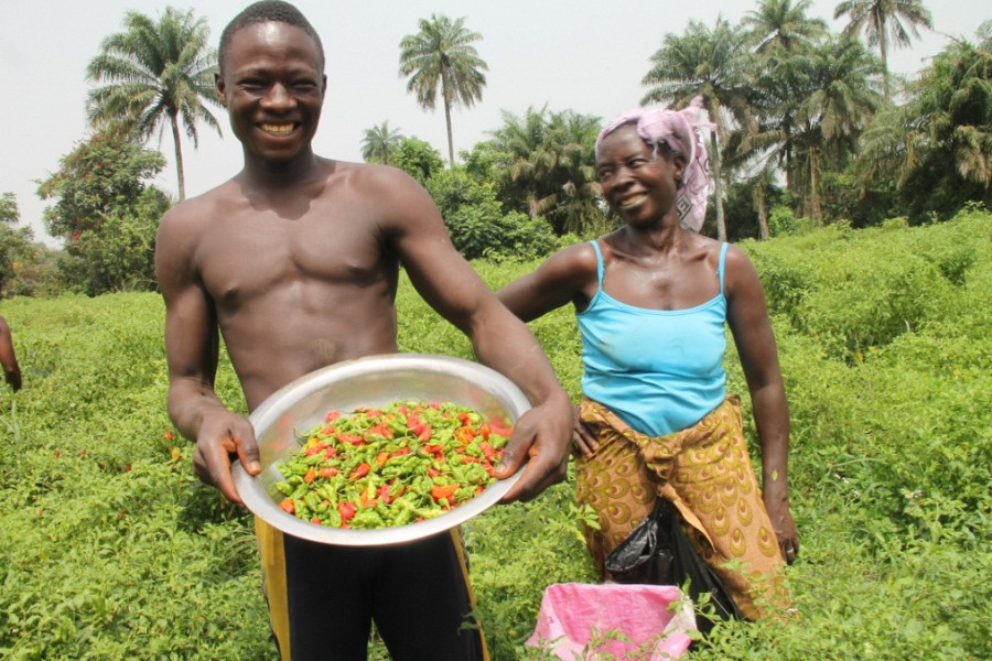 Photo of a farmer displaying the seasonal vegetables that agricultural loans have helped him grow.
