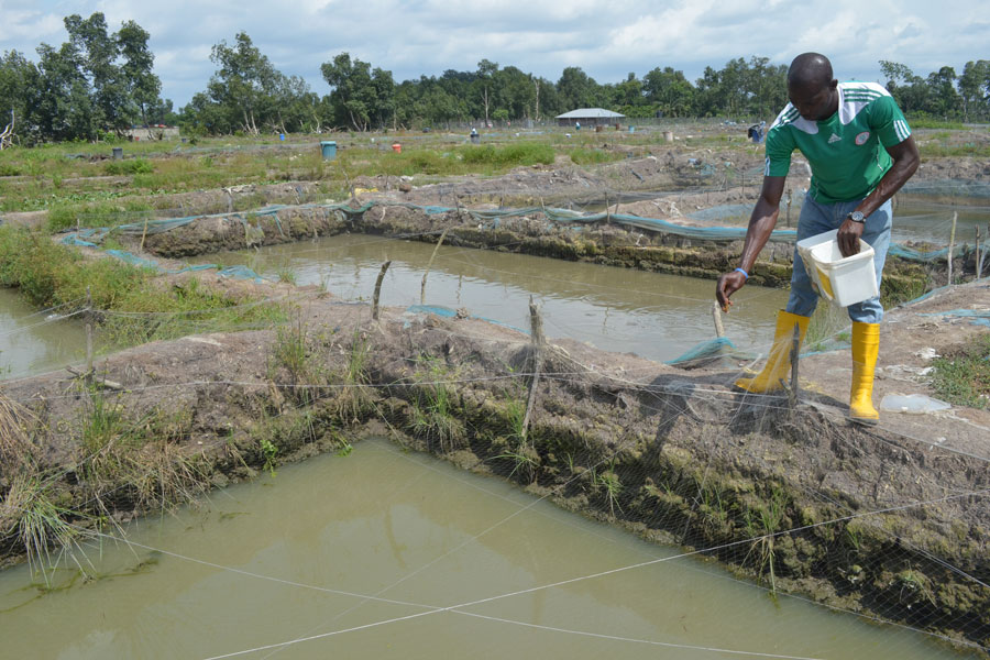 Photo of fish farming in the Niger Delta.