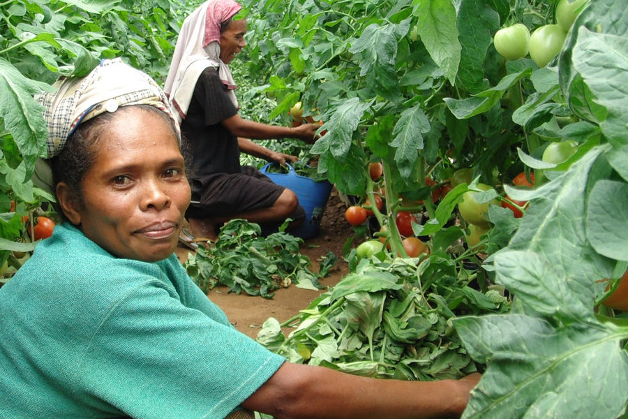 Photograph of a Timor-Leste farmer.